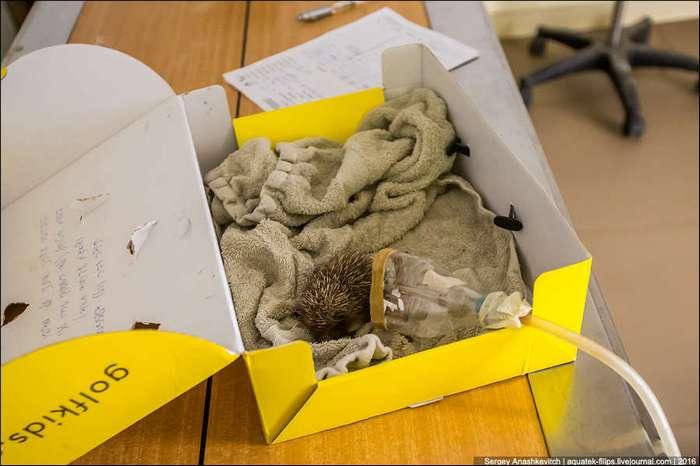 Нетуристический Израиль. Больница для животных в зоопарке Тель-Авива