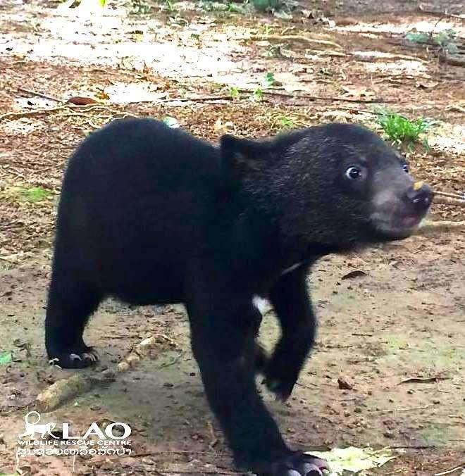Спасенный медвежонок не может поверить, что обрел дом