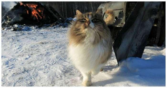 Эти кошки точно знают, как быть победителями по жизни