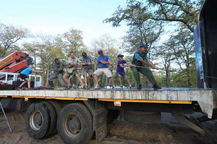 Особенности перевозки слонов