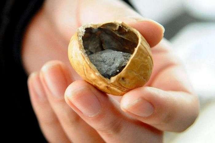 Грецкие орехи по-китайски. Подделки вышли на другой уровень