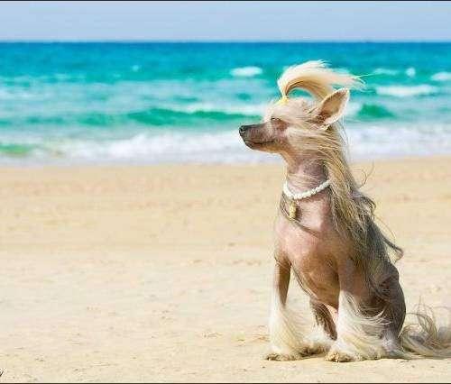Смешные и позитивные фото с моря