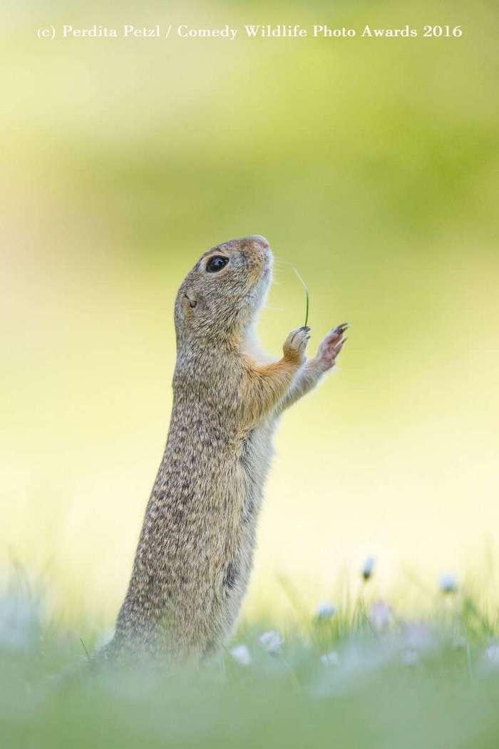Изумительные снимки дикой природы от финалистов ежегодного конкурса на самую смешную фотографию