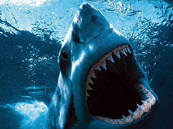 10 самых больших рыб в мире