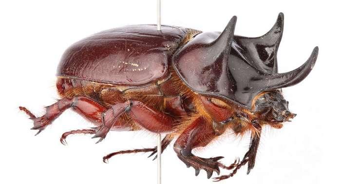 Уникальные снимки насекомых от команды Техасского университета