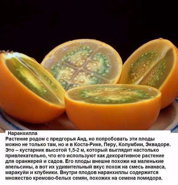 Цитрусовые, которые вы, вероятно, еще не пробовали