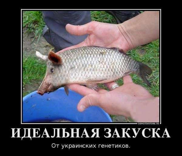 Давайте улыбаться чаще )