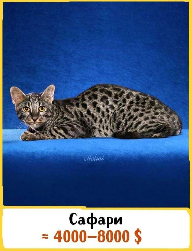 Самые дорогие коты в мире топ