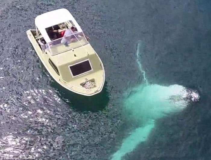 Ужасы морских глубин: опасности, которые таит в себе океан