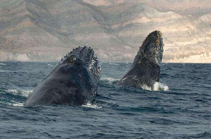 Уже 25 лет этот фотограф документирует жизнь дельфинов и китов