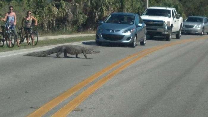 Как выглядят бродячие собаки во Флориде