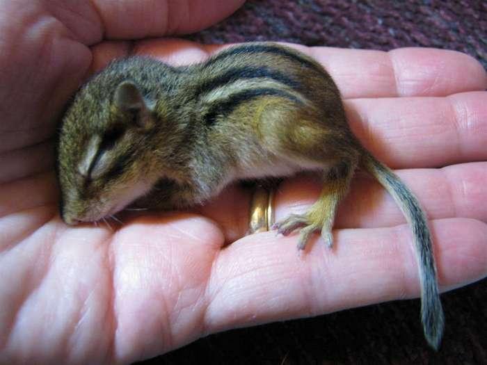 17 крошечных животных, которых так и хочется спрятать от опасного мира