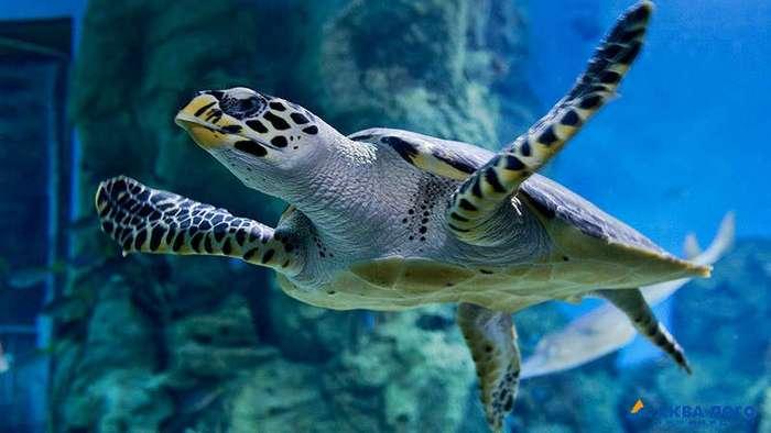 10 заблуждений о черепахах
