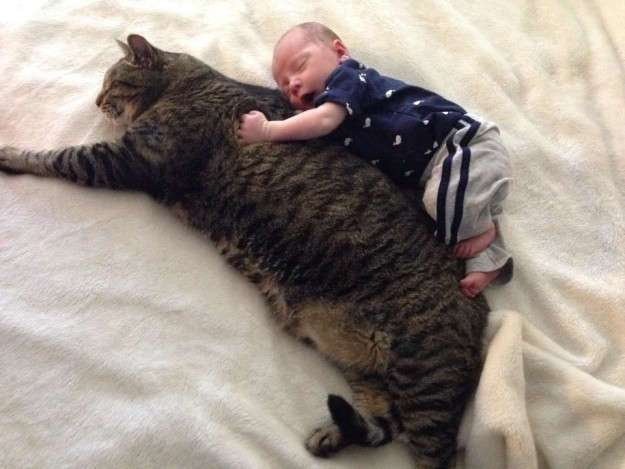 18 по-настоящему огромных котов
