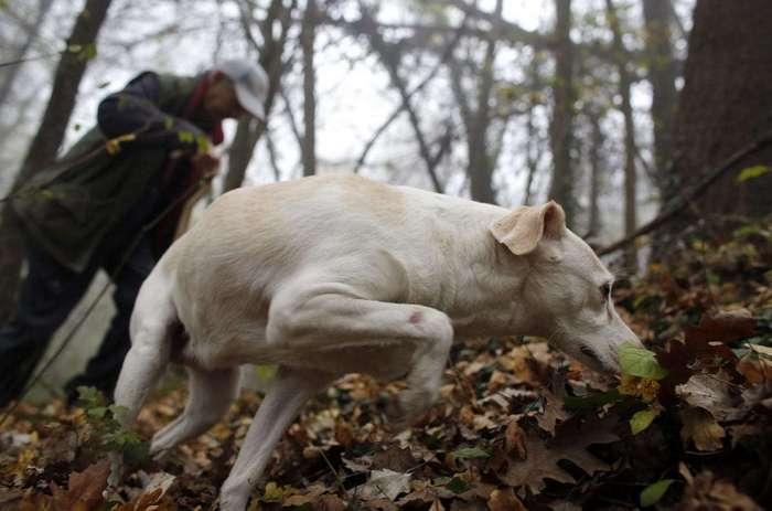 Охота за трюфелями в Италии