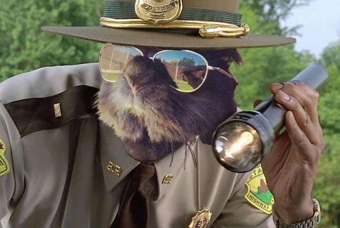 Смешной кролик в очках спровоцировал битву фотошоперов