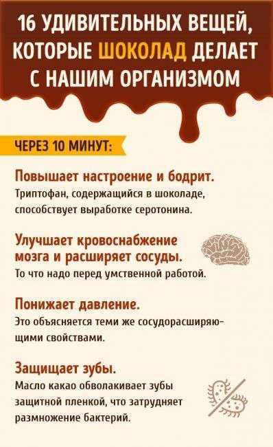 Что происходит с нашим организмом после дольки шоколада