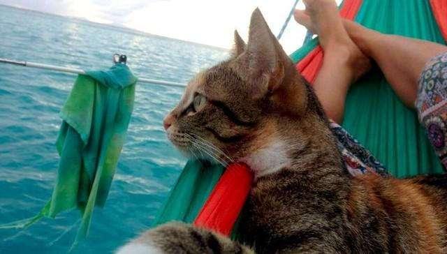 Кошка, спасенная из заброшенного дома, теперь путешествует вокруг света