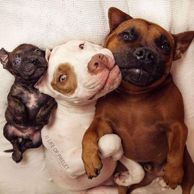 Взрослые собаки взяли опеку над спасённым щенком!