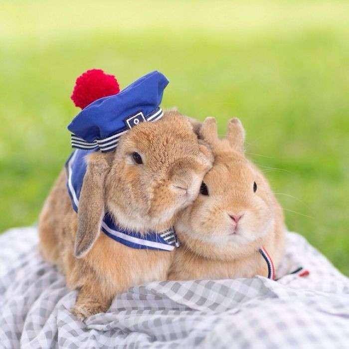 Встречайте самого стильного в мире кролика