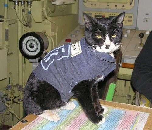 Атомный кот