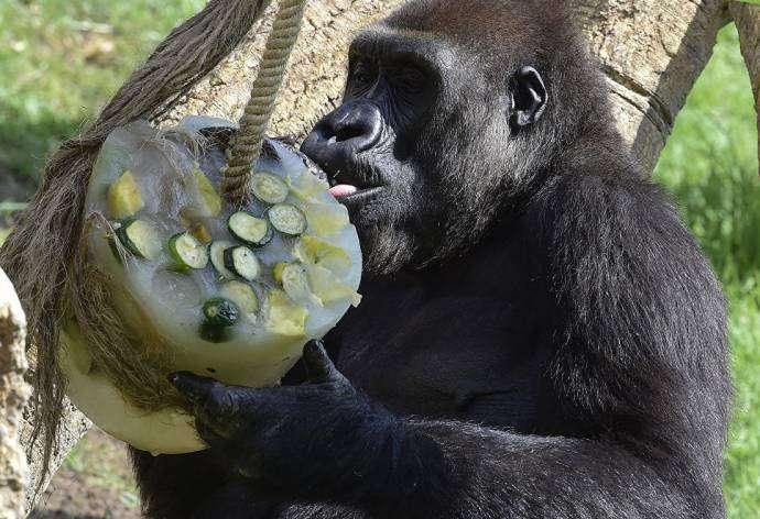 Как спасают от жары животных в зоопарке Валенсии
