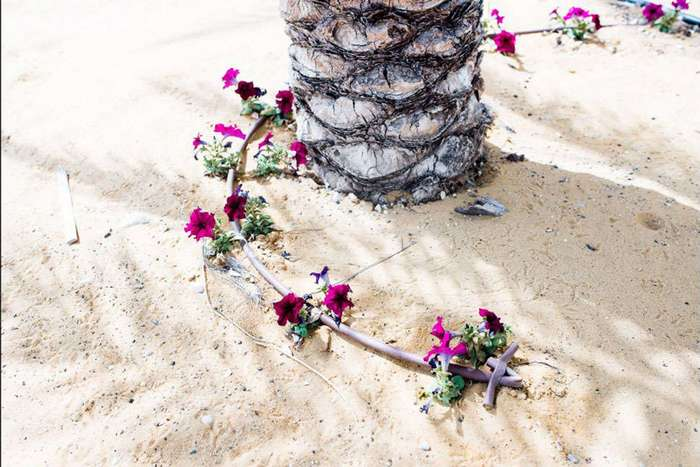 Фотопроект: умирающее Мертвое море