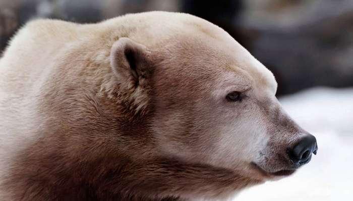 Как будут выглядеть животные после изменения климата