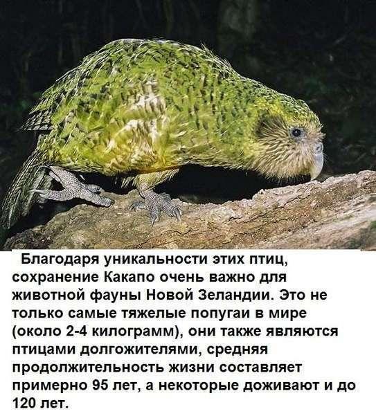 Спасение птенца попугая