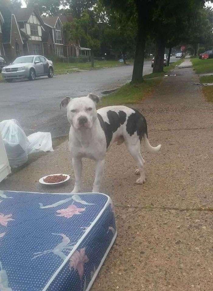 Брошенный пес целый месяц ждал хозяев на тротуаре