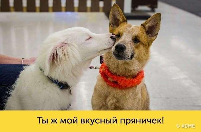 15 доказательств, что в каждой собаке живет великий актер