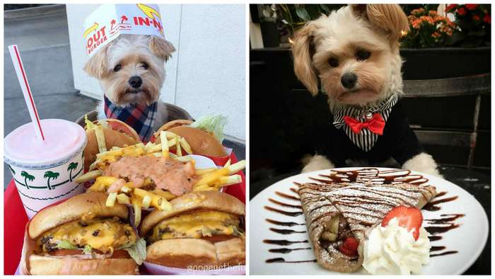 Уличного голодного пса подобрали, обогрели и сделали гурманом