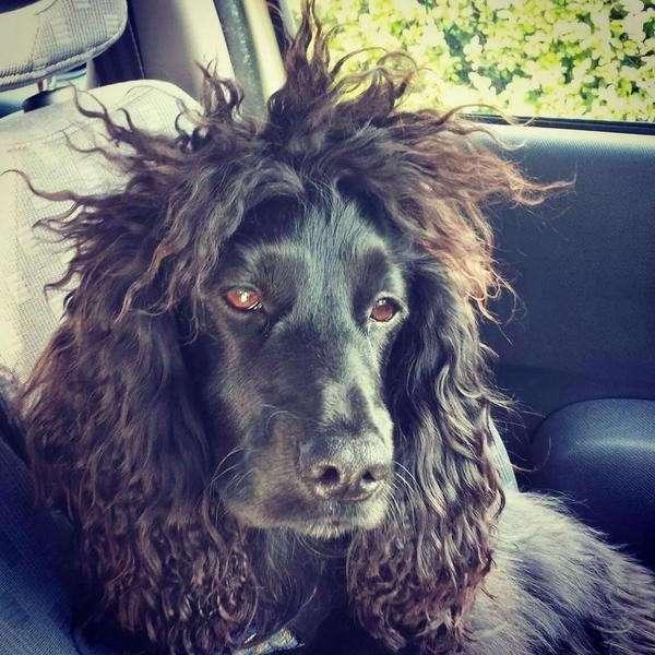 20 по-настоящему безумных причёсок