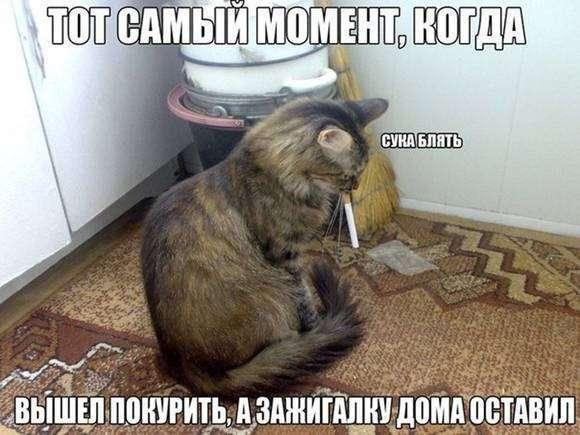 Просто котики