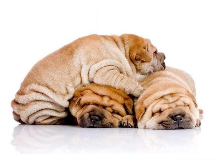 50 фотографий животных которые попытаются поднять Вам настроение