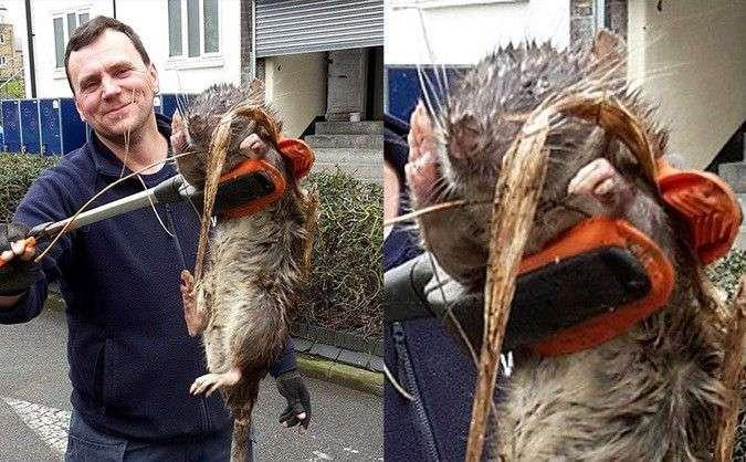 На детской площадке нашли полутораметровую крысу