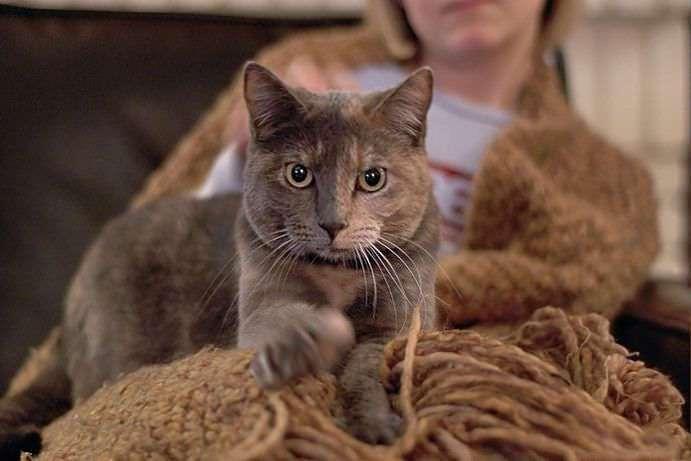 Почему кошка топчет вас лапками? Ответ найден!