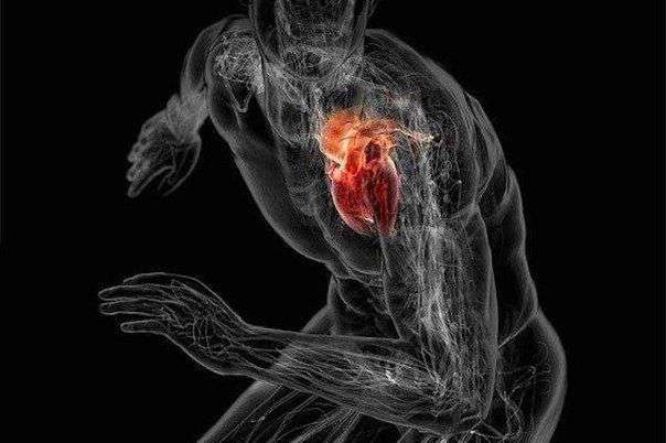 Тренировка сердца и развитие выносливости