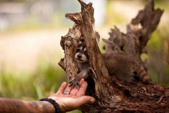 Детеныши животных. Фото и интересные факты