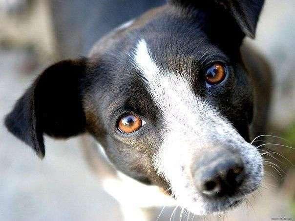 Почему собаки - действительно героические животные?