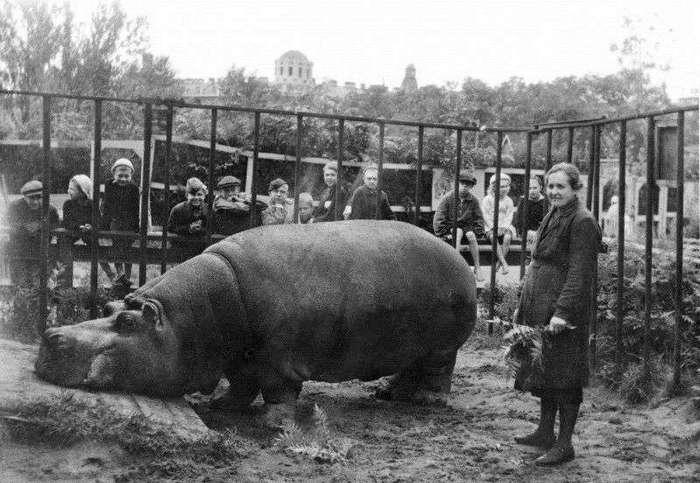 Ленинградский зоопарк в Блокаду