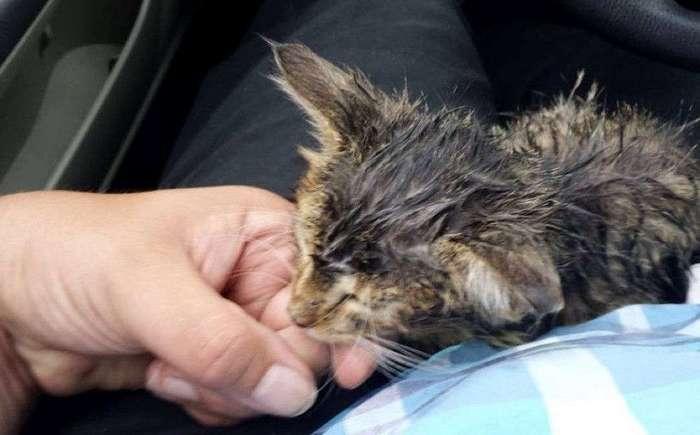 Бродячий котенок остановил молодого человека и попросил забрать его домой