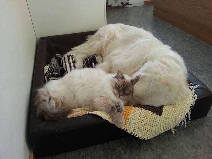 21 причина любить котиков – даже когда они засранцы