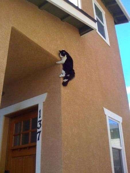 Ох уж эти кошки...