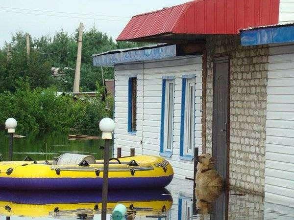 Пес Дружок удивил и растрогал своей верностью: всю ночь сторожил затопленный дом и ждал хозяев по шею в воде