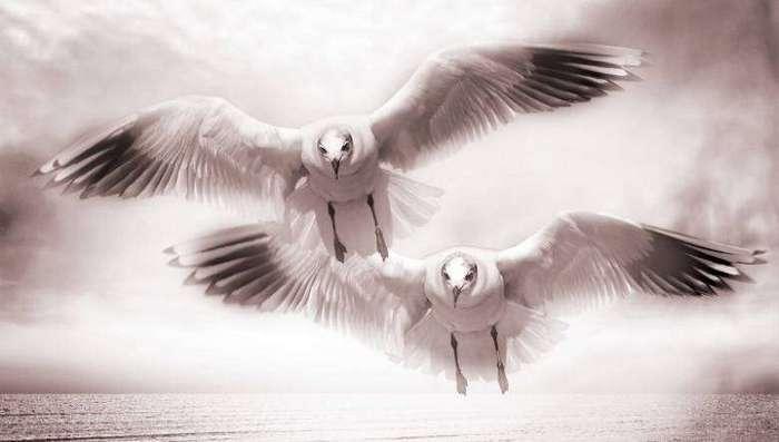 Вестники смерти: Животные и птицы
