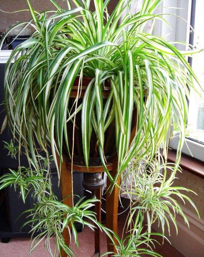 12 домашних растений, которые могут выжить даже в самом темном углу