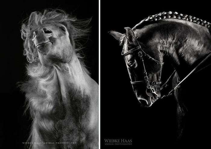 Как бросить скучную офисную работу и начать фотографировать лошадей