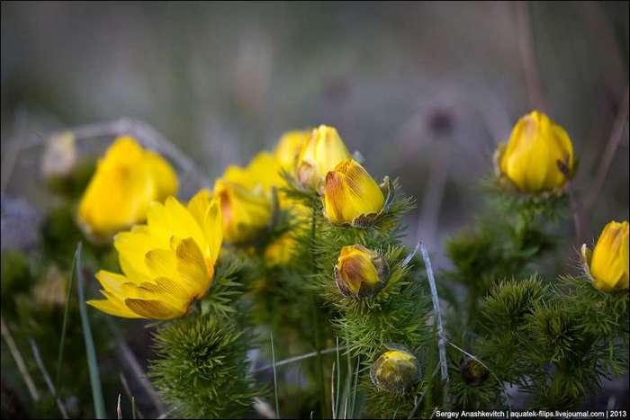 Как цветут Крымские горы