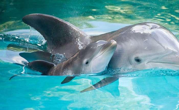 Как устроен мозг дельфинов